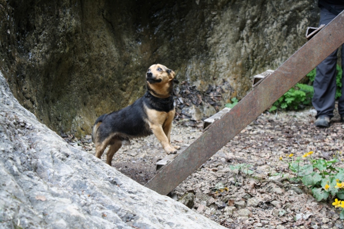 Even this adventurous dog is a little hesitant about this.